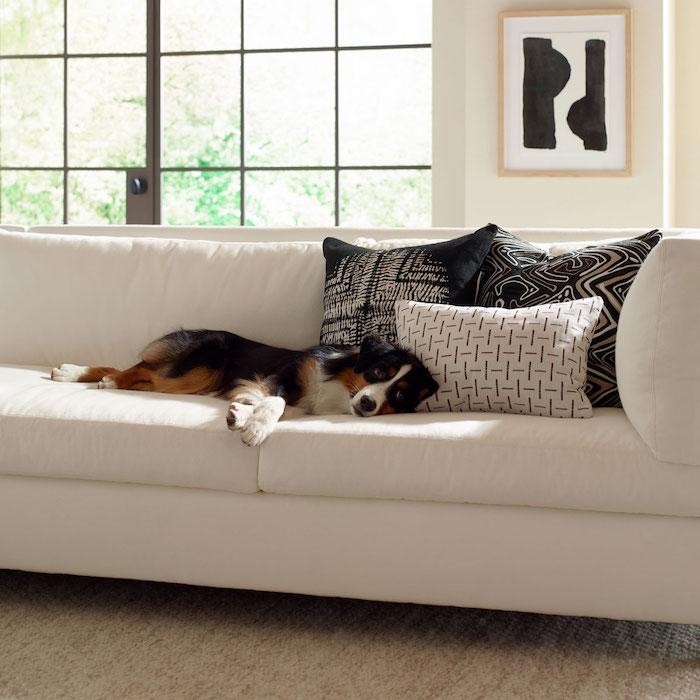 Dog lying on white sofa